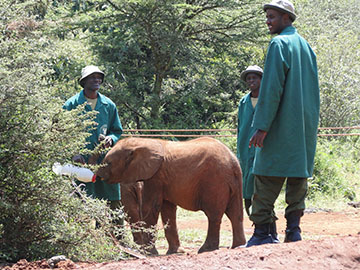 Nairobi Safaris